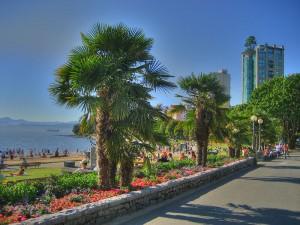 Vancouver_palms_englishbay